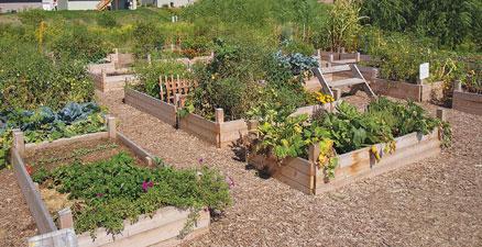 E U0026 A Consulting Develops Concept For Springbrook Neighborhood Garden  Cultivation Project In Omaha, NE