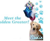 Pets in the Workplace: Meet the Golden Greeter!