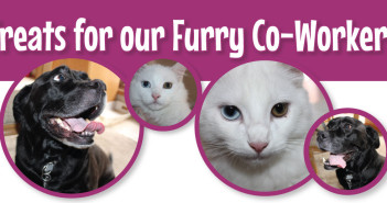 Pets in the Workplace Header