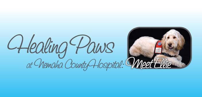 Healing Paws at Nemaha County Hospital: Meet Ellie - Header