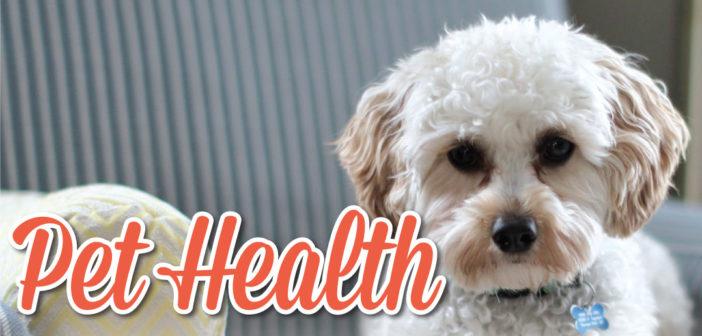 Pet Health in Omaha, NE – 2019