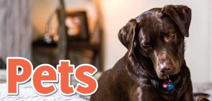 Pets in Omaha, NE – 2020